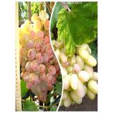 Комплект из 2-х сортов в Дербенте - Виноград Преображение + Виноград Фламинго