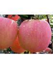 Яблоня Фуджи в Дербенте